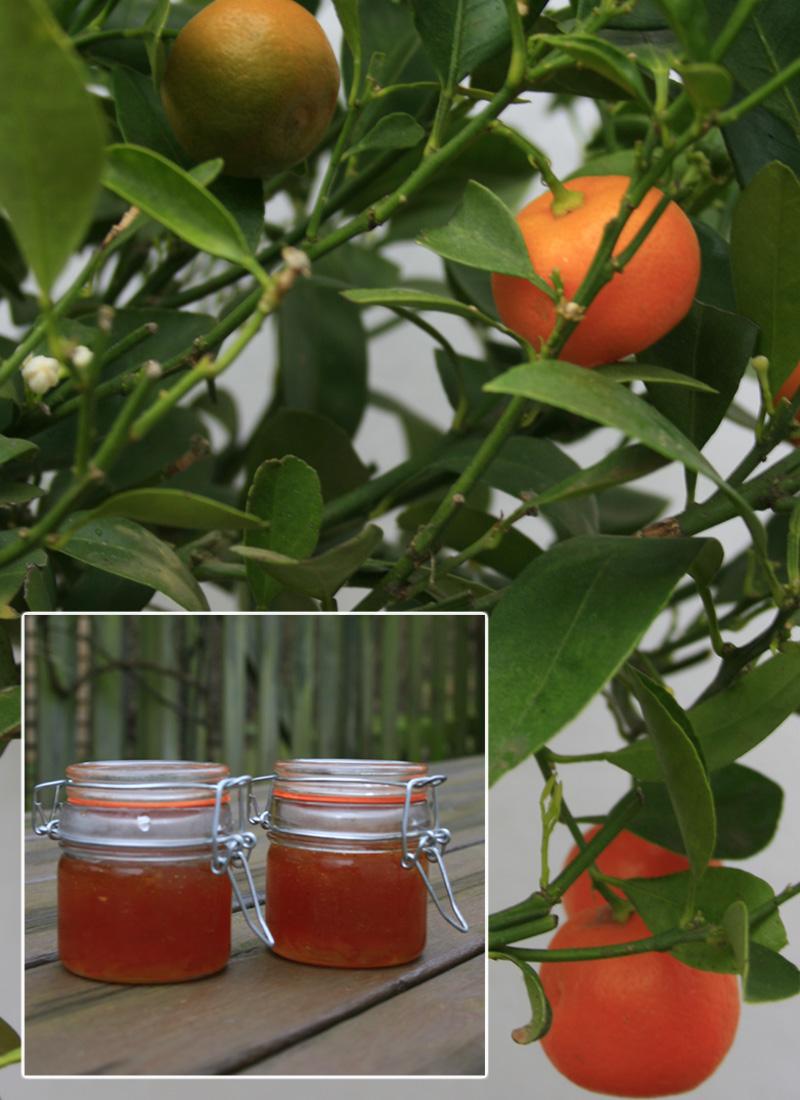 Calamondin marmelade