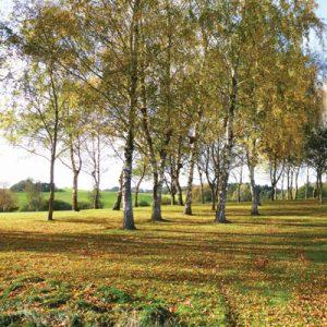 Birkelunden mellem hul 9 og 15 er smukkest om efteråret.